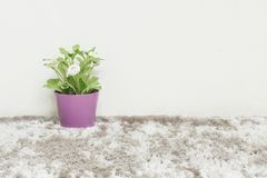 Closeup artificial green plant made from plastic with white flower in purple pot on blurred gray carpet and white cement wall text. Closeup artificial plant made Royalty Free Stock Photos