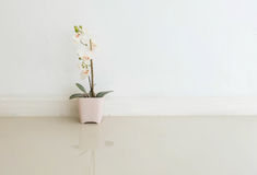 Closeup artificial plant with white flower on pink flower pot on blurred marble floor and white cement wall textured background , Stock Photo
