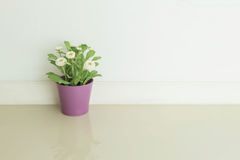 Closeup artificial plant with white flower on purple pot on blurred marble floor and white cement wall textured background. Artificial plant with white flower on Royalty Free Stock Photo