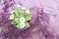 Closeup artificial plant with white flower on purple pot on purple carpet textured background in top view. Closeup artificial plant with white flower on purple Royalty Free Stock Images