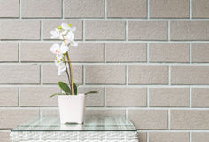 Closeup artificial plant with white orchid flower on pink flower pot on wood weave table on blurred brown brick wall texture backg Royalty Free Stock Images