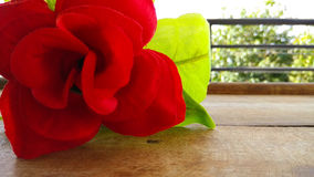Closeup Artificial red rose flower Stock Image