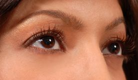 Closeup of attractive woman's brown eyes Royalty Free Stock Photography