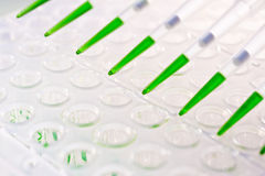 Loaded multipipette over a plate for DNA analysis Stock Photo