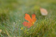 Closeup of autumn colorful leaf royalty free stock photos
