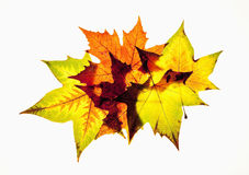Closeup of Autumn Leaf - Isolated on White Royalty Free Stock Images