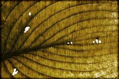 Closeup autumn leaf Stock Photography