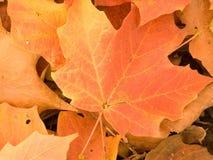 Closeup of autumn leaves Stock Photo