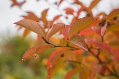 Closeup of Autumn leaves in garden stock photo