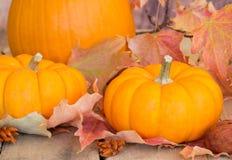 Closeup of Autumn Pumpkins Royalty Free Stock Photo