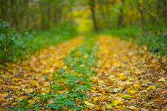 Closeup autumn road Royalty Free Stock Images
