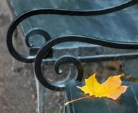 Closeup autumn yellow leaf of a maple lying on an old vintage be. Nch with two twisted armrests of artistic forging royalty free stock images