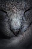 Closeup av att sova kattframsidan. Makro. Abstrakt begrepp Arkivfoton