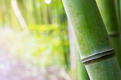 Closeup av bambu med oskarp kopieringsutrymmebakgrund a royaltyfri fotografi