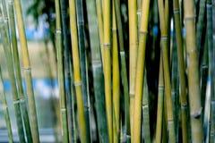 Closeup av bambubakgrund royaltyfri fotografi