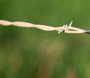 Closeup av Barbed - tråd Arkivfoto