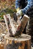 Closeup av björkträ som huggas av, och att dela royaltyfri bild