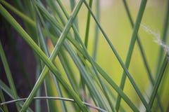 Closeup av blad för grönt gräs i skog royaltyfria bilder