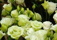 Closeup av blommor Arkivbilder