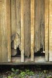 Closeup av cypresssidingen på den gamla kabinen i Kissimmee, Florida Arkivfoton