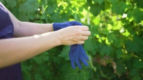Closeup av den caucasian kvinnlign i förklädet som sätter på blått som arbeta i trädgården handskar lager videofilmer