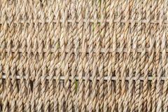 Closeup av den detaljerade gnäggandet Arkivfoton