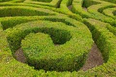 Closeup av den formella fnurenträdgården Royaltyfri Foto