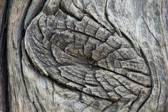Closeup av den gamla träfnuren Royaltyfri Bild