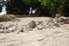 Closeup av den gula bruna sandiga stranden med koraller i f?rgrund och gr?na tr?d i bakgrund royaltyfri fotografi