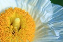 Closeup av den gula och vita blomman arkivbilder