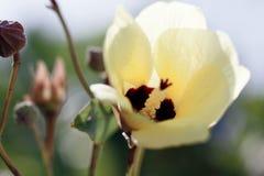 Closeup av den härliga gula blomman i trädgården Arkivfoton