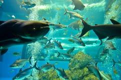 Closeup av den härliga havsfisken Royaltyfri Bild