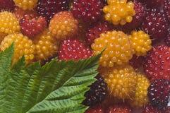 Closeup av den lösa salmonberryen, Rubrus spectabilis med bladet Royaltyfri Foto