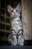 Closeup av den lilla kattungen för cutie arkivfoton