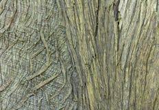Closeup av det gamla trädskället för texturerad bakgrund Royaltyfria Bilder