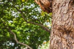 Closeup av detaljer för trädstam med grön bokehbakgrund Royaltyfri Bild