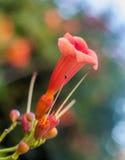 Closeup av en blomma Arkivbilder