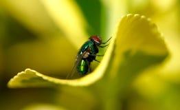 Closeup av en fluga på ett grönt blad arkivfoton