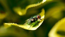 Closeup av en fluga på ett grönt blad royaltyfri fotografi