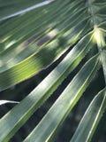 closeup av en grön växt Royaltyfria Bilder