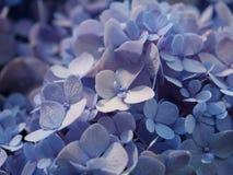Closeup av en grupp av ljust - blåa blommor royaltyfri fotografi