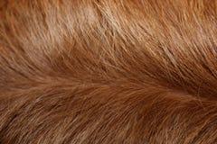 Closeup av en hundkapplöpningpäls Arkivfoto