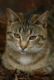 Closeup av en katt Arkivfoton