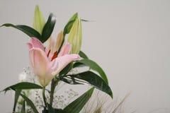 Closeup av en lilja royaltyfria foton