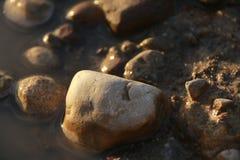 Closeup av en liten sten i gyttjan arkivfoton