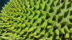 Closeup av en panna Royaltyfri Bild