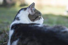 Closeup av en skönhetkatt Royaltyfria Bilder