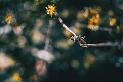 Closeup av en torkad blomma av en växt arkivfoton