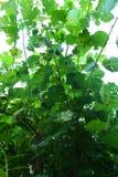 closeup av en växt Royaltyfri Bild