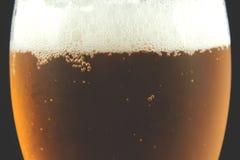 Closeup av ett exponeringsglas av öl Royaltyfri Foto